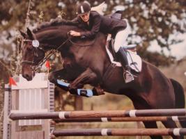Foto 2 Ein Freizeitkumpel wie ihr eigenes Pferd? Stelle bis M gerittenes Pferd zur Verfügung