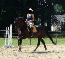 Ein Freizeitkumpel wie ihr eigenes Pferd? Stelle bis M gerittenes Pferd zur Verfügung