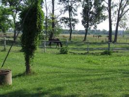 Foto 4 Ein Reiteranlage in Ungarn mit28ha Land