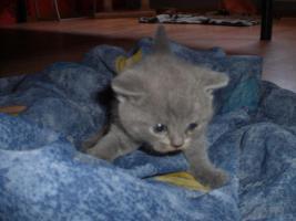 Foto 3 Ein Traum in Blau!