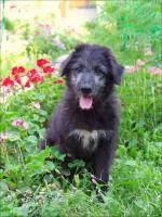 Ein kleines Hundebaby sucht eine große Wiese zum toben