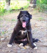 Foto 3 Ein kleines Hundebaby sucht eine große Wiese zum toben