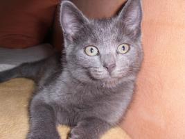 Ein16 Wochen altes katzenpersermix Mätchen sucht ein liebevolles zuhause .