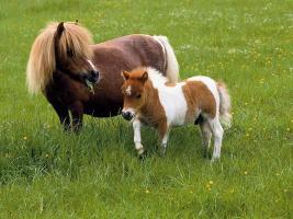 Eine nette 3 Zimmer Wohnung mit Garten für 2Personen und 1miniatur Pony