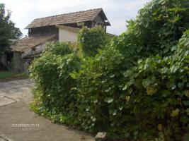 Foto 4 Einfamilienhaus in Ungarn Hercegszanto