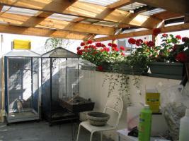 Foto 2 Einfamilienhaus in Winningen/Mosel, hochwasserfrei