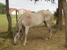 Einstellplatz für 1-2 Pferde