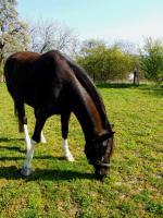 Foto 2 Einstellplatz für 1-2 Pferde