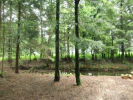 Foto 6 Einzigartiges Gartengrundstück