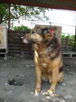 Foto 3 Ella (geb. 2002)