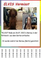 Elvis vermisst! 1000€ Belohnung ausgesetzt!