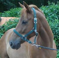 Endmaß Pony Mix Stute