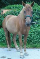 Foto 2 Endmaß Pony Mix Stute