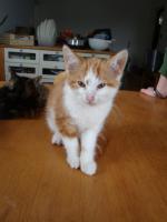 Foto 2 Entzückende Kätzchen