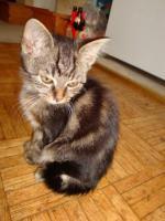 Foto 3 Entzückende Kätzchen