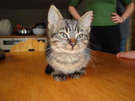 Foto 4 Entzückende Kätzchen