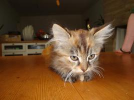 Foto 5 Entzückende Kätzchen