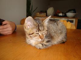 Foto 6 Entzückende Kätzchen