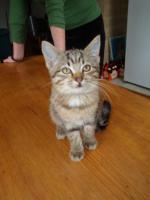 Foto 7 Entzückende Kätzchen
