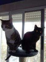 Foto 3 Enzo und Jerry, eine Geschichte voller Pleiten, Pech und Pannen
