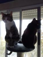 Foto 4 Enzo und Jerry, eine Geschichte voller Pleiten, Pech und Pannen