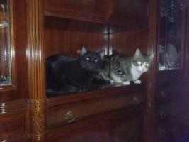 Foto 5 Enzo und Jerry, eine Geschichte voller Pleiten, Pech und Pannen