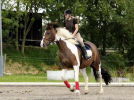 Erfahrende Reitbeteiligung f�r junges Pferd