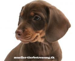 Erfahrene Tierbetreuung