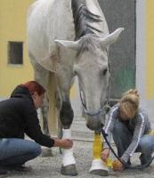Erste Hilfe & Wundversorgung am Pferd