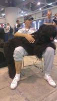 Erste Wahl Russischer Schwarzer Terrier Welpen zu verkaufen