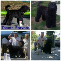 Foto 3 Erste Wahl Russischer Schwarzer Terrier Welpen zu verkaufen