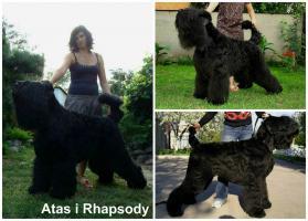 Foto 5 Erste Wahl Russischer Schwarzer Terrier Welpen zu verkaufen