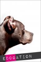 Erziehung & Training von Hunden nach Erkenntnissen der Verhaltenstherapie & Hundepsychologie.