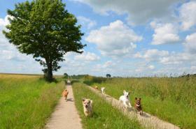 Hundeurlaub an der Ostseeküste