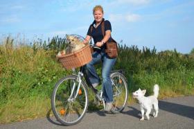 Fahrradtour mit Ihrem Hund