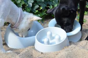 Hunde-Näpfe verschiedenster Ausführungen