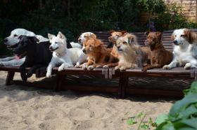 Die Anzahl der Hunde ist nicht begrenzt