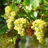 Exklusiver Weinhof im Überetsch/Südtirol Italien