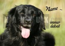 FLAT COATED RETRIEVER Auto - Aufkleber
