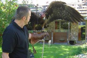 Falkner Workshop - Adlerwanderungen - Habichtwanderungen