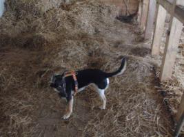 Foto 2 Familie gesucht von Familienhund Siri