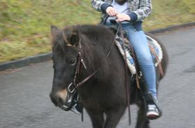 Foto 2 Familien und Kinder Pony 1,25 geritten & gefahren Anfänger Pony