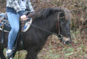 Foto 3 Familien und Kinder Pony 1,25 geritten & gefahren Anfänger Pony