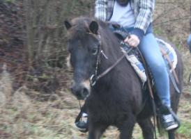 Foto 4 Familien und Kinder Pony 1,25 geritten & gefahren Anfänger Pony