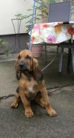 Foto 2 Familienhund
