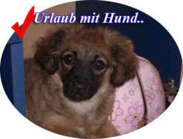 Foto 8 FeWo mit Meeresblick Insel Vir für 4 Personen Hunde willkommen