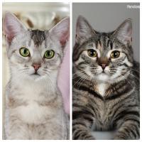 Fee und Molly, zwei zauberhafte Katzenmädchen