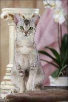 Foto 3 Fee und Molly, zwei zauberhafte Katzenmädchen