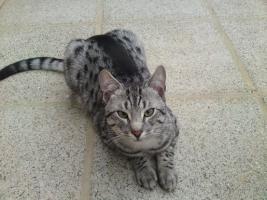 Felix seit 15.11.09 vermisst - FINDERLOHN-