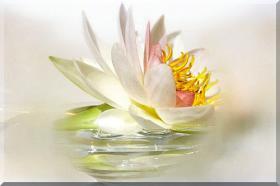 Feng Shui Poster *Seerosen - Leichtigkeit*